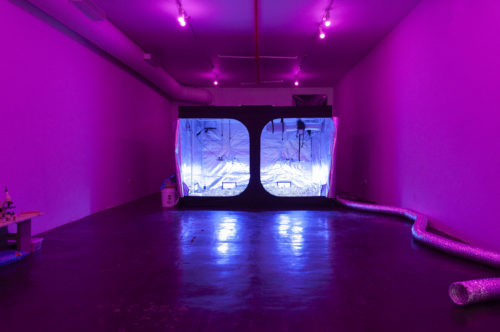 Tiffany Jaeyeon Shin's Grow Tent